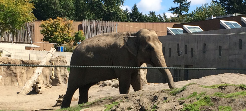 FOZE Joins the Animal Rights March | Free the Oregon Zoo Elephants