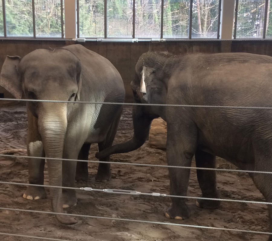 Breeding Programs at the Oregon Zoo | Free the Oregon Zoo Elephants