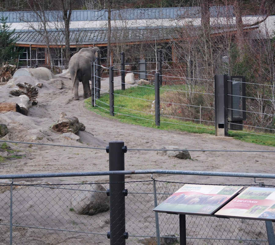 Lack of space for Elephants at the Oregon Zoo | Free the Oregon Zoo Elephants